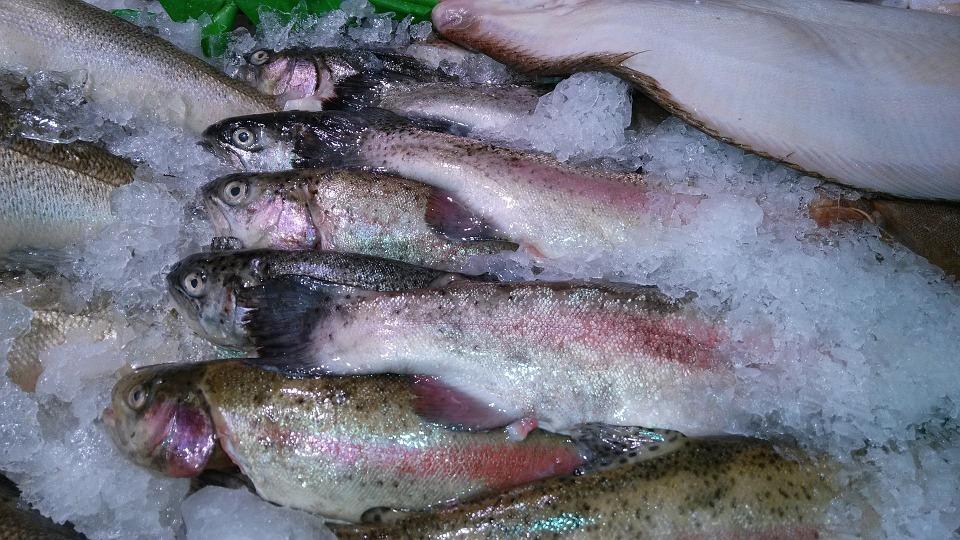 تفريز السمك
