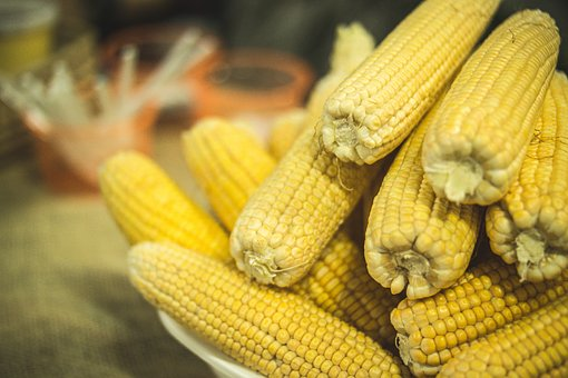 الذرة بالفوائد عامرة