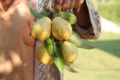 فاكهة الخريف الجوّافة