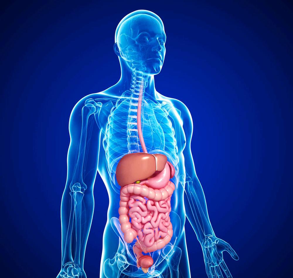 كم مدة هضم الطعام في المعدة تعرف على جهازك الهضمي هل تساءلت كم مدة هضم الطعام في المعدة ان عملية الهضم في جسم الإنسان تستغرق وقتاً طويلاً نسبياً، حيث يقوم الجهاز الهضمي بالعديد من الخطوات المتتالية ما بين امتصاص العناصر الغذائية وتخليص الجسم من الفضلات. ما هي الآلية و كم مدة هضم الطعام في المعدة عندما يتم تناول الأكل تحتاج المعدة مدة من خمس الى ثمان ساعات لتُمرره للأمعاء الدقيقة . وحينما يمر الغذاء بالقولون (الأمعاء الغليظة) ليستكمل العملية الهضمية ويمتص الماء بعدها يقوم وعن طريق البراز بالتخلص من الطعام . ومدة العملية الهضمية تختلف بعدة عوامل تبعا للشخص وطبيعة الجسم والعملية الهضمية في الجهاز الهضمي تستغرق من 24 إلى 72 ساعة بالمتوسط في عملية الهضم . تتوزع مدة هضم الطعام في المعدة عملية تفريغ المعدة من 2 إلى 5 ساعات. مرور الطعام من الأمعاء الدقيقة يحتج تقريبا 6 ساعات. مرور الطعام من الأمعاء الغليظة (القولون) من 10 إلى 59 ساعة. الخروج من الأمعاء بشكل تام 10 إلى 73 ساعة. ما هي العوامل التي تتحكم في مدة عملية الهضم ؟ نوع وكمية الطعام الذي يتم تناوله فبعض الأغذية تكون سهلة الهضم الأطعمة السكرية من أسرع الأطعمة التي يتم هضمها لذا يتم الشعور بالجوع بعت تناولها بفترة قصيرة . والأغذية الغنية بالألياف كالفواكه والألياف تُعززعمل الجهاز الهضمي وبعضها يصعب هضمها وبالتالي تستغرق وقتا أطول مثل اللحوم والأسماك التي تصل ليومين لتُهضم بشكل تام كذلك الأطعمة الغنية بالدهون والبروتينات لغناها بجزيئات معقدة أيضا تأخذ مدة زمنية أطول في الهضم . التوتر أو الإجهاد الشديد الحالة النفسية . مشاكل صحية تؤثر على الجهاز الهضمي فإما أن تبطىء عملية الهضم أو تسرعها مث ماهي مشكلة الإمساك الذي يعيق اكتمال عملية الهضم. حالة الارتجاع الحمضي الذي يتسبب في الشعور بحرق في المعدة وبالتالي الاضطرابات الهضمية . داء الرتج الذي يتسبب في حدوث التهاب في المعدة و الإصابة بألم البطن والبراز الرخو فيؤثر على وظائف الجهاز الهضمي متلازمة القولون العصبي تسبب متلازمة القولون العصبي مشاكل الهضم، بالإضافة إلى الغازات والإسهال أو الإمساك التهاب القولون التقرحي